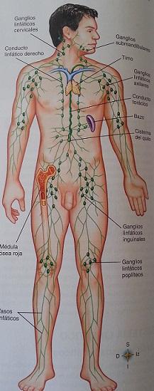 sistemalinfatico
